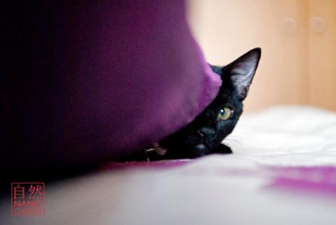 Kitten Portraits