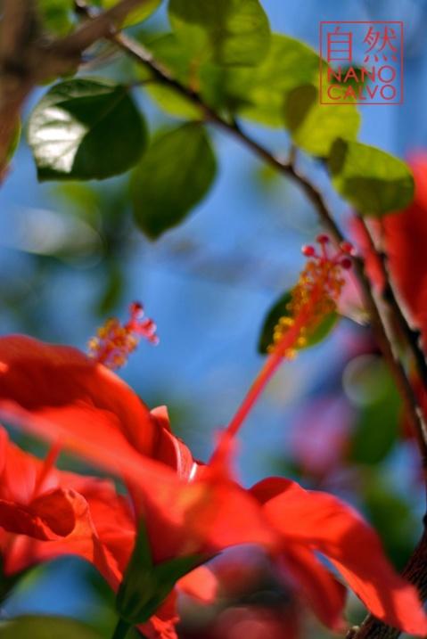 Flora of Ibiza