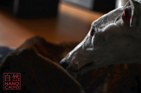 Hounding Misery, The Misfortune of being a Spanish Greyhound