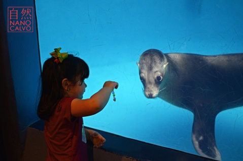 Young girl plays with sea lion and her bracelets