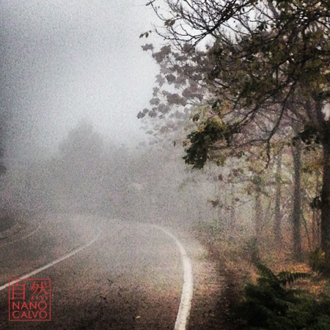 FoggyTurnerNanoCalvo