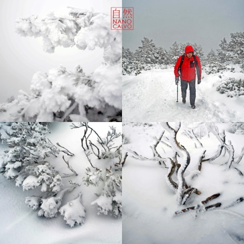 WinterNanoCalvo