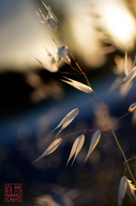 Fine Art Flora Images by Nano Calvo